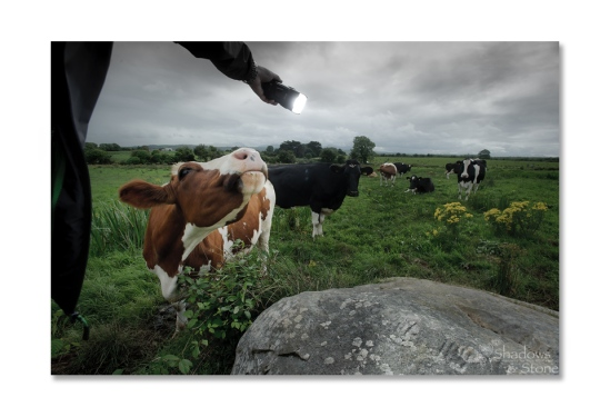 Cattle breath on your fingers means move quick or get licked...